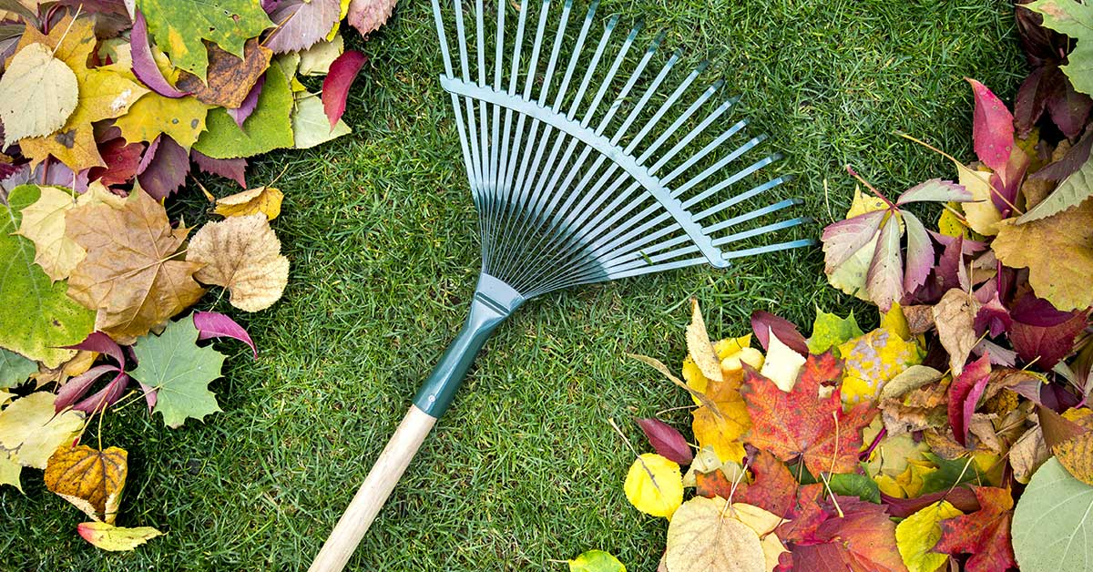 Fall and Spring Clean Ups