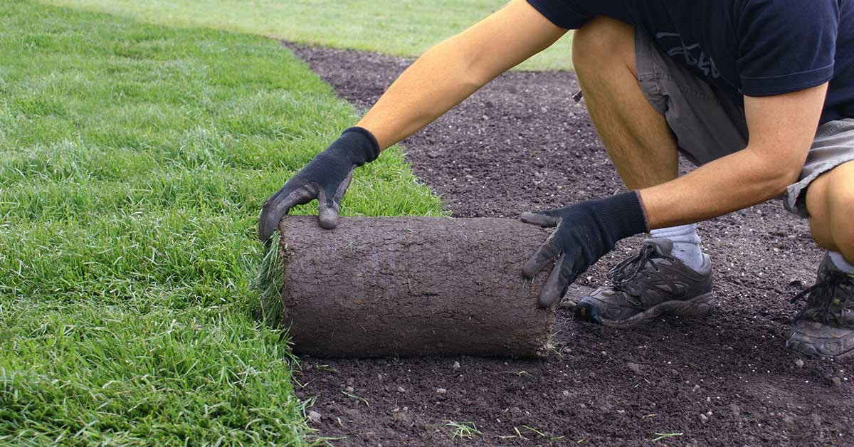 Sod Planting