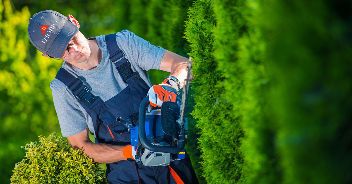 Commercial Tree Trimming Service